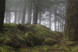 Лес на Мадейре
