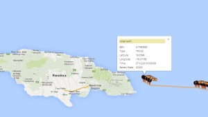 Marlene подходит к Ямайке